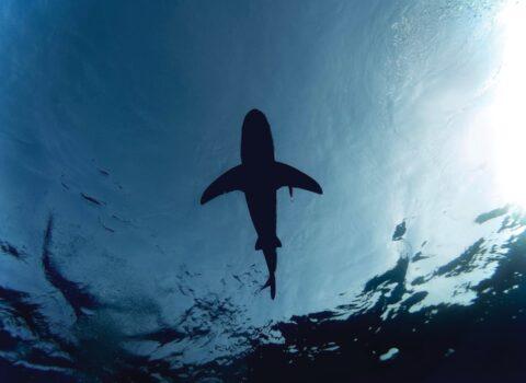 El Tiburón Fantasma. Todo un Misterio